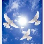 three doves circling in the blue sky with sun